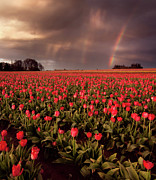 Field. Cloud Posters - Tulips And Rainbows Poster by Jamey Pyles Photography