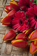 Spring Tulips Photos - Tulips and red daisies  by Garry Gay
