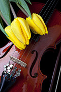 Music Metal Prints - Tulips and Violin Metal Print by Garry Gay