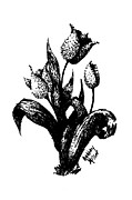 Blooming Drawings Metal Prints - Tulips Metal Print by Ashley Miller