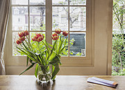 Petals Lifestyle Photos - Tulips in a Vase by Andersen Ross