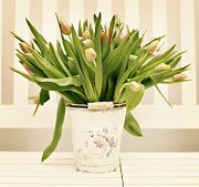 Western Script Art - Tulips In Bucket by Www.andreakamal.com