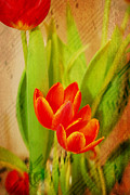Staff Digital Art - Tulips in Harmony by Mary Timman