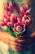 One Person Only Framed Prints - Tulips In Woman Hands Framed Print by Photo by Ira Heuvelman-Dobrolyubova