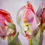 Tulips Print by Iris Lehnhardt