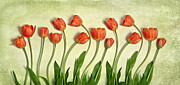 Heather Swan - Tulips lineup