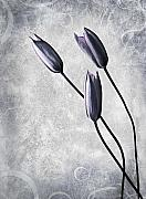 Mothers Art - Tulips by Photodream Art