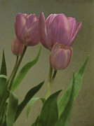 Tulips Reflections Print by Debra     Vatalaro