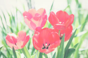 Vellum Prints - Tulips  Print by Toni Hopper