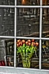 Amsterdam Digital Art - Tulips window by Marco Moscadelli