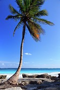 Latin America Prints - Tulum Mexico Single Tree On Beach Print by Maria Swrd