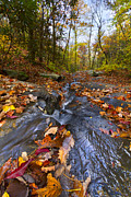 Fall River Scenes Posters - Tumbling Leaves Poster by Debra and Dave Vanderlaan