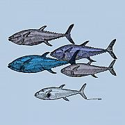 Swim Drawings - Tuna School Of Fish by Karl Addison