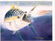 Fly Fishing Art Print Posters - Tuna to the Lure Poster by Bill Hubbard