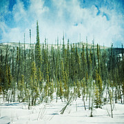 Thin Photo Posters - Tundra Forest Poster by Priska Wettstein