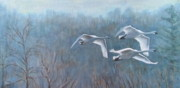 Swans Paintings - Tundra Trio by Anda Kett