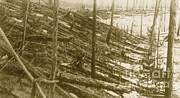 Flattened Prints - Tunguska Event, 1908 Print by Science Source
