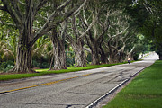 Road Paintings - Tunnel of Trees by Robert Smith