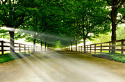 Driveway Photos - Tunnel vision by Dan Mihai