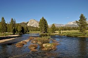 Meadows Art - Tuolumne River  by Martina Thompson
