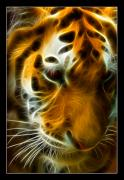 Tiger Fractal Framed Prints - Turbulent Tiger Framed Print by Ricky Barnard