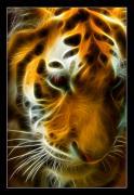 Turbulent Tiger Print by Ricky Barnard