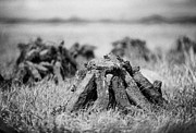 Republic Prints - Turf Peat Stacked For Drying On The Bog In Ireland Print by Joe Fox