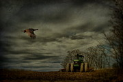 Farm Scenes Photos - Turkey Flight by Emily Stauring