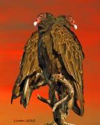 Turkey Metal Prints - Turkey Vulture Pair Metal Print by Larry Linton