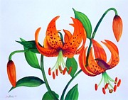 Turk Painting Originals - Turks Cap Lily by Jennie Robin