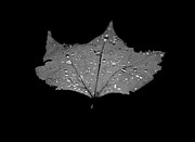Tree Leaf On Water Photo Prints - Turn Over a New Leaf Print by Betsy A Cutler East Coast Barrier Islands