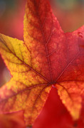 Autumn Prints Metal Prints - Turn Turn Turn Metal Print by Kathy Yates