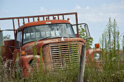 Dirt Roads Photos - Turned out to Pasture by Wilma  Birdwell