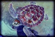Cayman Islands Prints - Turtle Print by Ariane Moshayedi