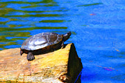Reptiles Digital Art Metal Prints - Turtle Basking In The Sun Metal Print by Wingsdomain Art and Photography