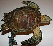 Still Life Sculptures - Turtle Bronze With Patina by Victor Douieb