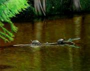 Reptiles Paintings - Turtle Log Spa by Doug Strickland