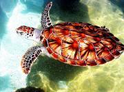 Wild Life Photos - Turtle by Rick DiGiammarino