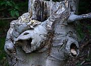 Tree Stump Photos - Turtle Tree by Linda Mishler