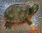 Montage Mixed Media - Turtle Wild Animals Mosaic by Paul Van Scott