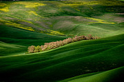 Y120907 Art - Tuscan Countryside by Massimo Pelagagge