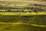 Southern Italy Framed Prints - Tuscan Fields Framed Print by Andrew Soundarajan