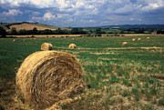 Hay Framed Prints Framed Prints - Tuscan Hay Bales Framed Print by Kathy Yates