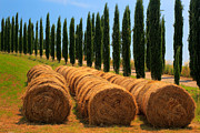 Italian Cypress Photo Acrylic Prints - Tuscan Hay Acrylic Print by Inge Johnsson