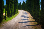 Italian Cypress Photo Acrylic Prints - Tuscan Road Acrylic Print by Inge Johnsson