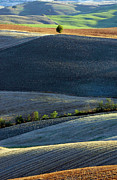 Tuscan Hills Framed Prints - Tuscan Tree Framed Print by Michael Biggs