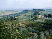 Tuscan Hills Mixed Media Posters - Tuscan Vines Poster by Paul Barlo