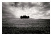 Cypress Trees Digital Art Posters - Tuscany - Italy - Black and White Poster by Marco Hietberg