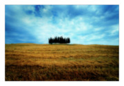 Cypress Trees Digital Art Posters - Tuscany - Italy Poster by Marco Hietberg