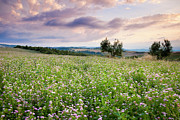 Tuscan Sunset Prints - Tuscany Flowers Print by Brian Jannsen